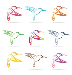 Group of hummingbird vector