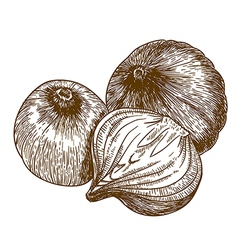 Engraving tree onions vector