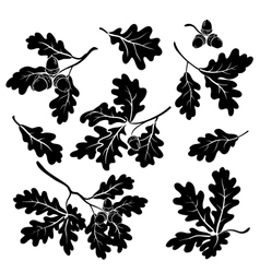 Oak branches with acorns silhouettes vector