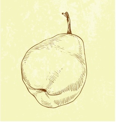 Pear fruit - vintage vector