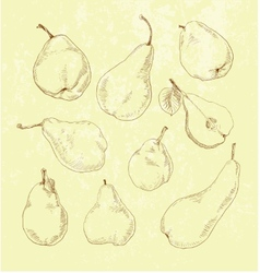 Pear fruit - vintage set vector
