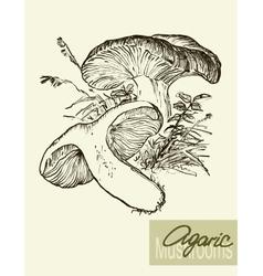 Set of linear drawing mushrooms vintage vector
