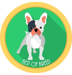 Dog best of breed medal icon flat design vector