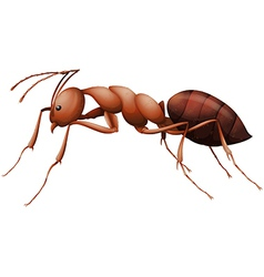 The ant vector