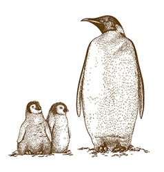 Engraving penguins vector