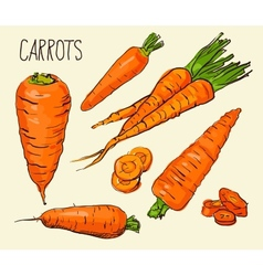 Set carrots isolated on white background vector