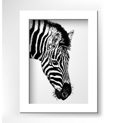 Artwork head profile zebra digital sketch of vector
