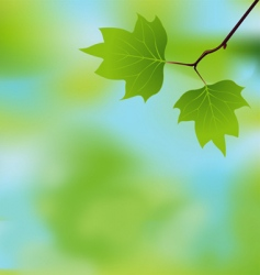 Spring branch background vector