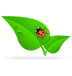 Ladybug on green leaf vector