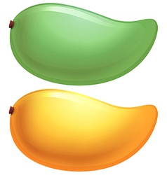 A green and a yellow mango vector