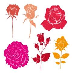 Hand drawn rose flowers set vector