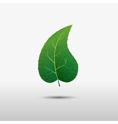 Green leaf of the tree icon vector