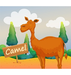 A camel with a wooden signboard vector