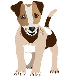 Jack russell terrier puppy vector