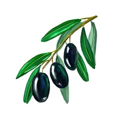 Olives on branch hand drawn vector