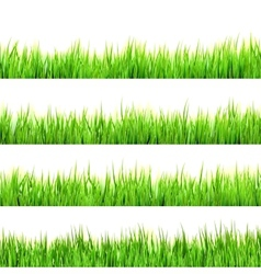Green grass isolated on white eps 10 vector