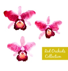 Collection of red watercolor orchids vector