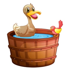 A duck and a bird taking a bath vector