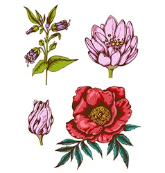 Set of hand drawn vintage flowers vector