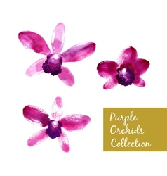Collection of purple watercolor orchids vector