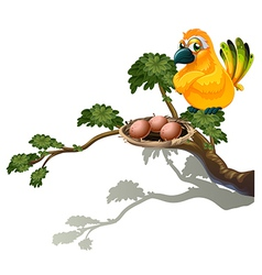 An orange bird watching the eggs vector