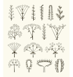 Set of different types of inflorescence vector