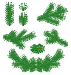 Fir tree branches vector