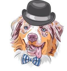 Hipster dog red australian shepherd breed vector