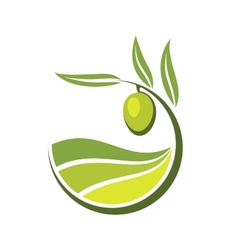 Fresh green olive with grades of olive oil vector