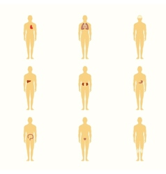 Human figures with internal organs vector