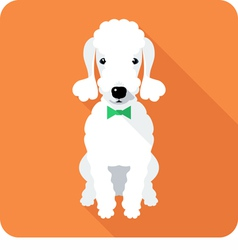 Dog bedlington terrier sits icon flat design vector