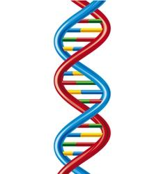 Dna-deoxyribonucleic acid vector