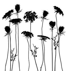 Traced graphic elements weeds vector