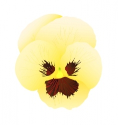 Yellow pansy vector