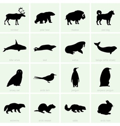 Polar animals vector