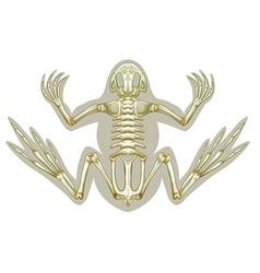 Frog skeletal system vector