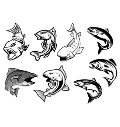 Cartoon salmons fish set vector