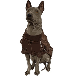 Thai ridgeback dog breed sitting vector