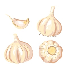 Garlic set vector