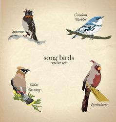 Song bird set vector