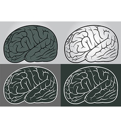 Brain set vector