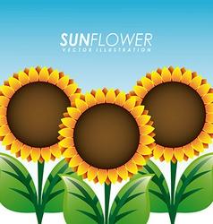 Sunflower garden vector