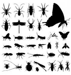 Set of insect vector