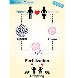 Human fertilization diagram vector