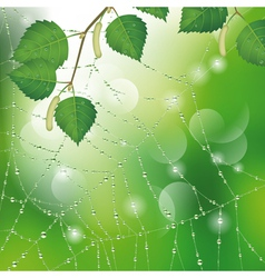 Spider web with leaves vector