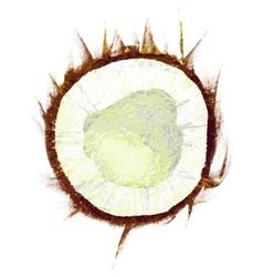 Drawing coconut vector
