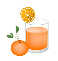 Glass of orange juice and oranges fruit vector