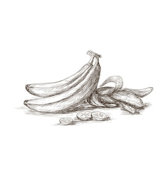 Hand drawn bananas vector
