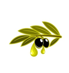 Olives on a leafy twig dripping oil vector