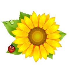 Sunflower with ladybird vector